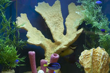 Saltwater or Fresh Fish Aquarium Designs and Installations for Custom Fish Tanks in Sarasota, Florida