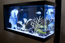 Fish Care Expert can Help Choose the Right Fish for Your Fish Tank Environment in Sarasota, Florida