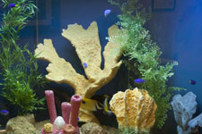 Expert in Fish Tanks and Tropical Fish can Design and Build the Perfect Fish Tank for you in Sarasota, FL