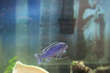 Fish Tank Maintenance Services by an Expert in Fish Aquariums for a Clean Fish Tank in Sarasota, FL