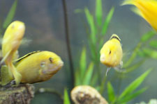 Clean Fish Tanks and Fish Tank Maintenance Services by an Expert in Fish Tanks for Sarasota, Florida