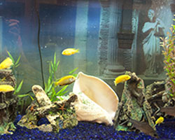 Concierge Fish Tank Service from Design to Installation to Maintenance in Sarasota, Florida
