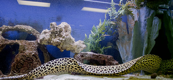 Contact the fish bowl for fish aquarium or fish tank for Eel fish tank