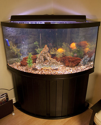 custom fish tanks aquariums installation sarasota florida
