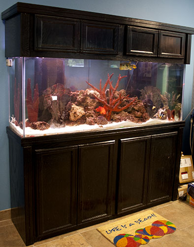 Fish Aquarium or Fish Tank Design, Install, and Maintain for Sarasota, Florida