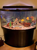 Custom Fish Aquarium and Fish Tank Design and Installations for Sarasota, Florida
