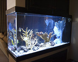 Custom Fish Aquarium Or Fish Tank Maintenance In Sarasota