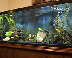 Fish Aquarium and Fish Tank Design, Installations, and Maintenance for Sarasota and Bradenton, Florida